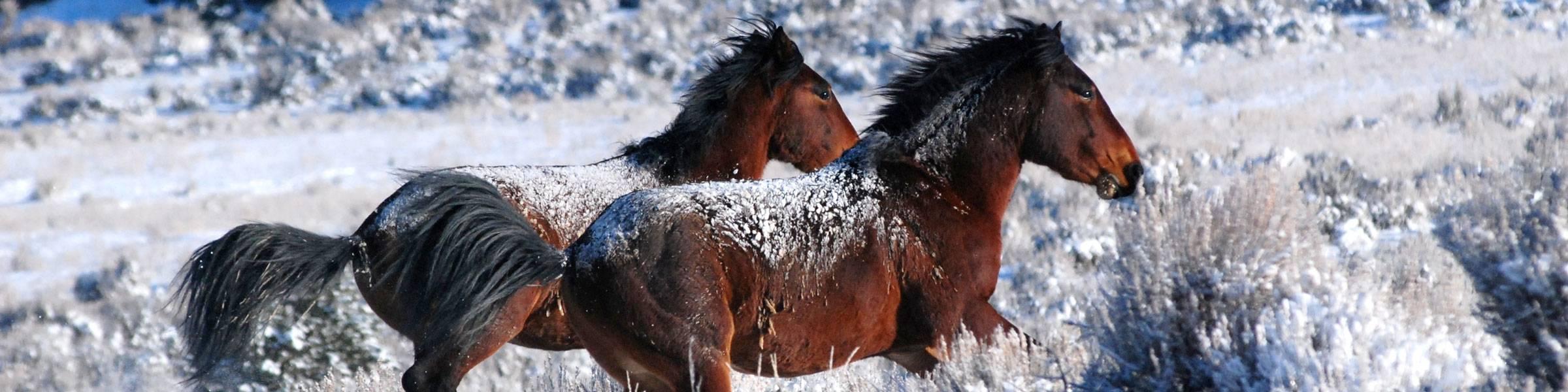 Rangely-Wild-Horses